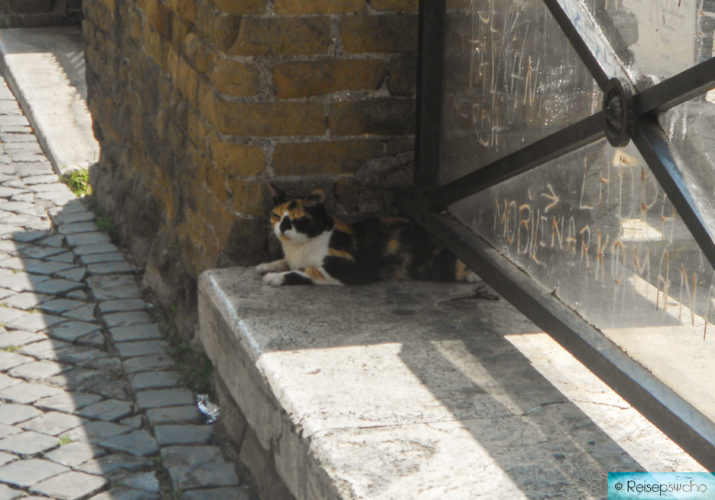 Katzen in Rom im Sommer