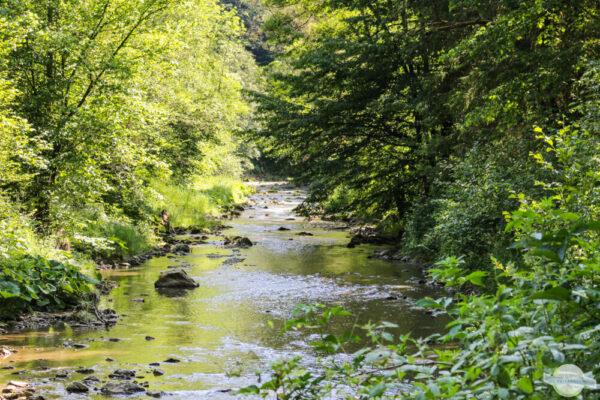 Fluss von Bäumen gesäumt