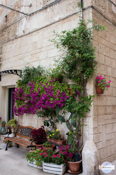 Haus mit Pflanzen in Monopoli, Italien