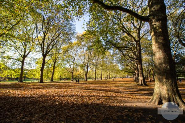 Central Park im Oktober - Tipps für London