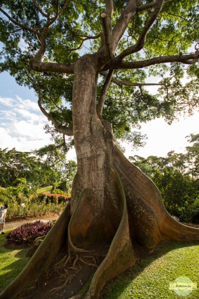 Botanischer Garten Guadeloupe