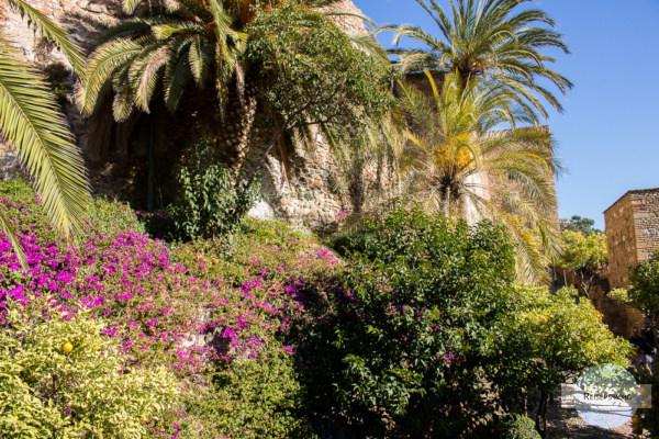 Blühende Pflanzen in Malaga im Dezember