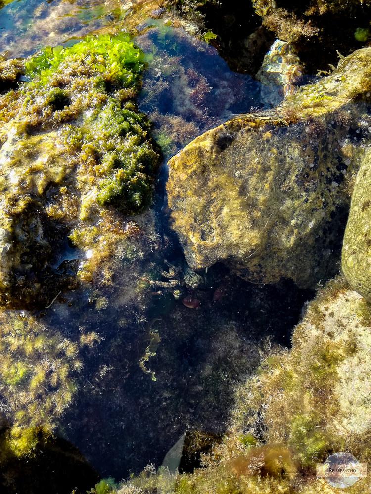 Krebs im Wasser