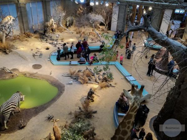 Zoologisches Forschungsmuseum Alexander König