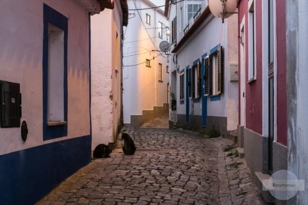 In den Gassen von Monchique sitzen Katzen