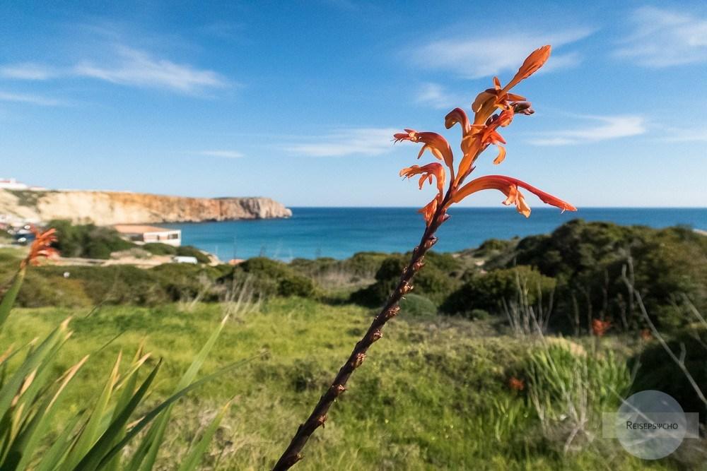 Algarve im Winter - sieht mehr nach Frühling aus