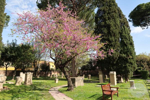 Cimitero Acattolico in Rom mit Baum in Blüte