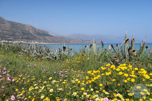 Kristallklares Wasser, Strand und Blumen - das ist Sizilien