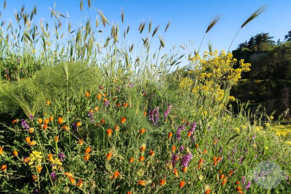 Blütenpracht in Sizilien