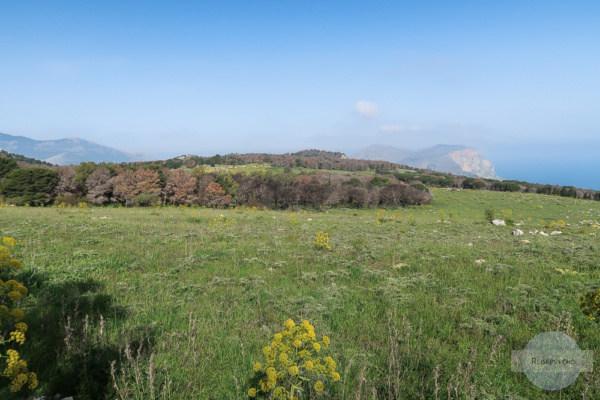 Wilder Fenchel und weiter Blick am Monte Pellegrino