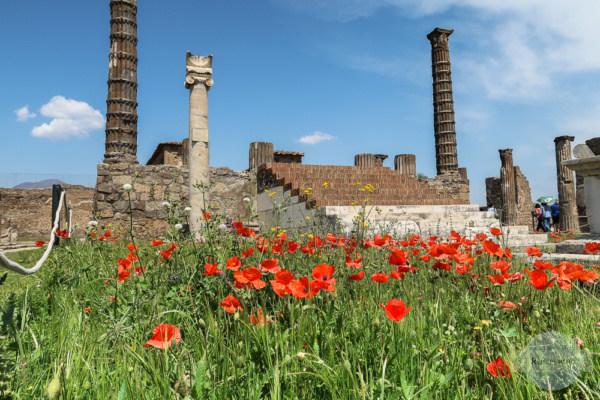 Blumen in Pompeji