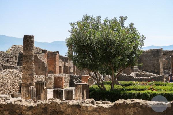 Ruinen und Baum in Pompeji