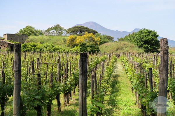 Weinbau in Pompeji