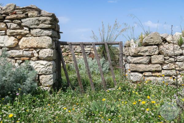 Alte Mauern und viele Blumen - das ist Segesta