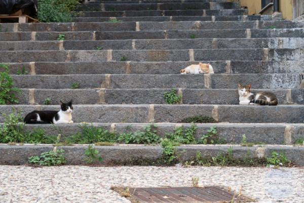 Katzen schlafen auf den Stufen