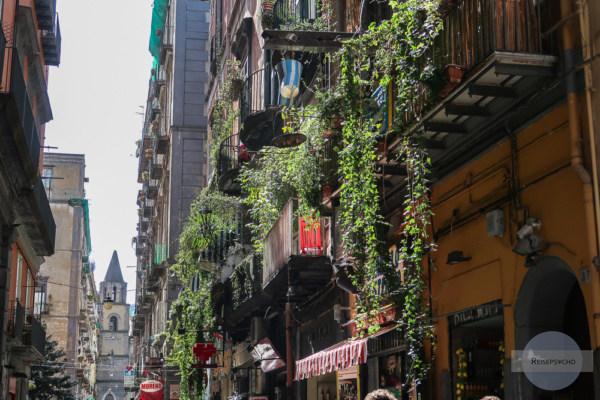 Balkon mit Efeu bewachsen in Neapel