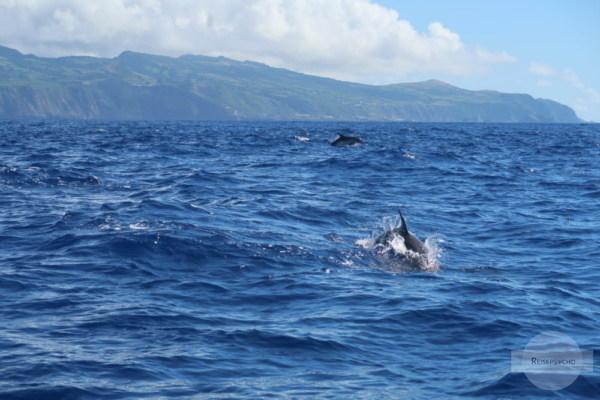 Delfine machen glücklich