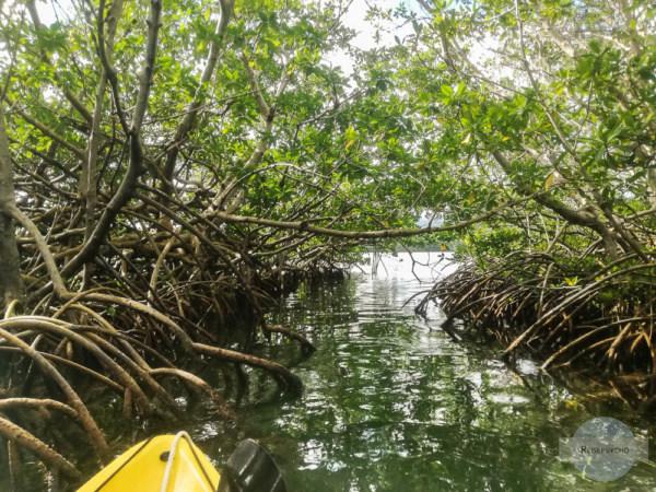 Was tun im Guadeloupe Urlaub? Mit dem Kanu durch den Mangrovenwald fahren!