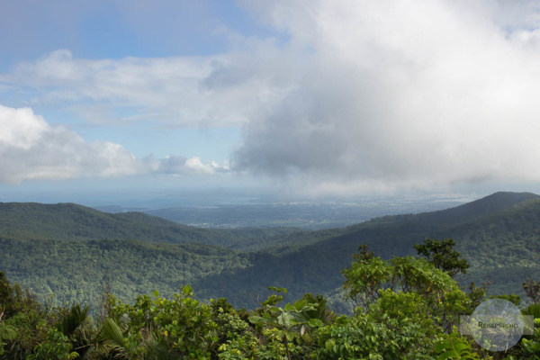 Regenwald auf Guadeloupe in der Karibik
