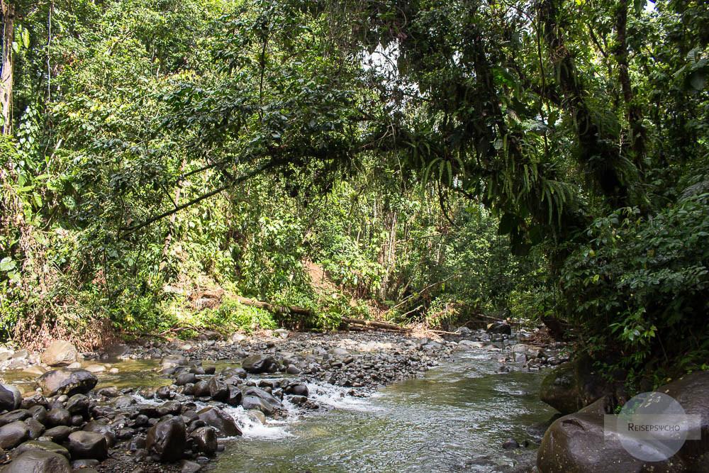Bach im Regenwald - unbedingt im Guadeloupe Urlaub besuchen