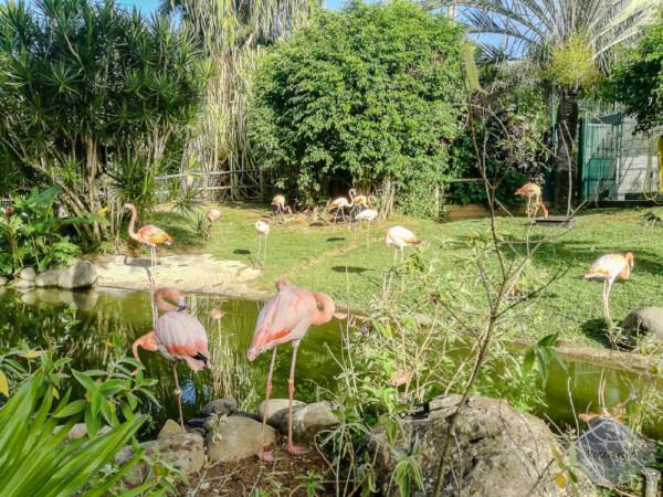 Flamingos im Botanischen Garten auf Guadeloupe