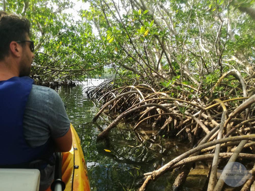 Kanufahrt in den Mangrovenwäldern auf Guadeloupe