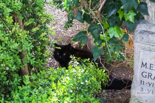 Römische Katze am Cimitero Acattolico