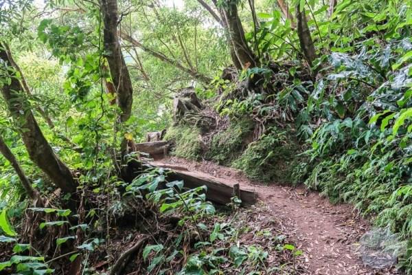 Wandern auf Sao Miguel - Azoren Reisetipps