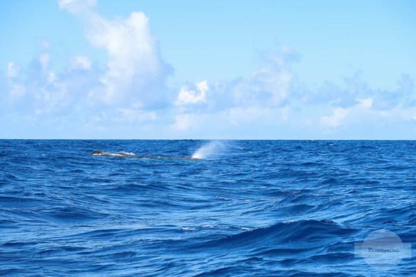 Wal beim Atmen