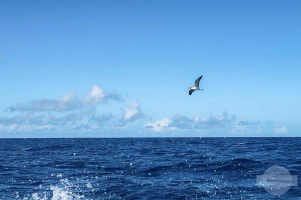 Wilder Atlantik Azoren