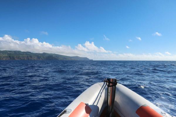 Whale Watching Azoren am Boot