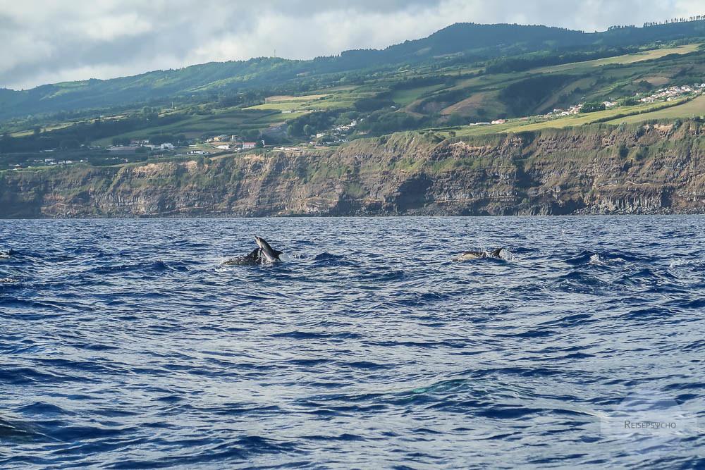Delfine vor Sao Miguel