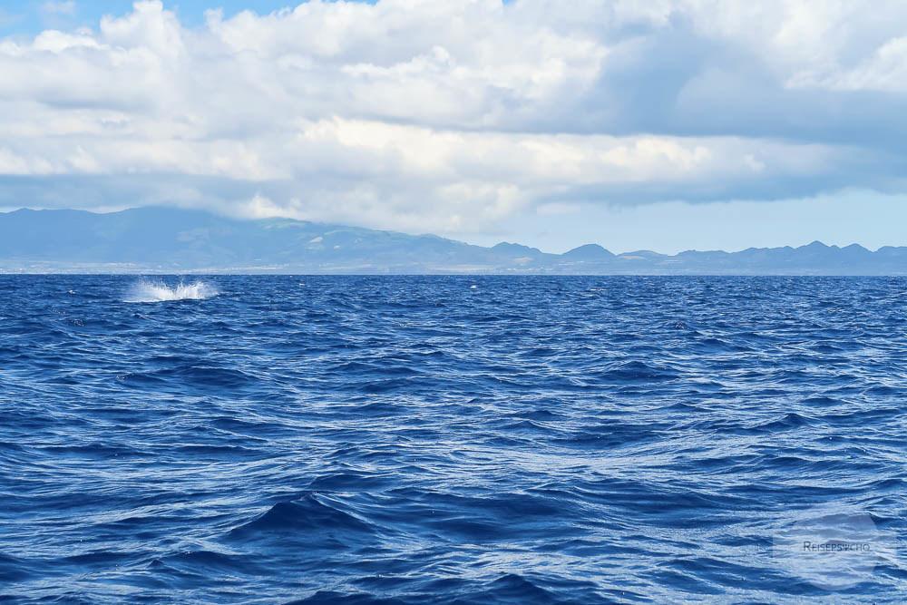 Whale Watching Azoren - Pottwal taucht ab