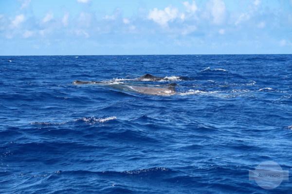 Wale im Meer Umweltschutz