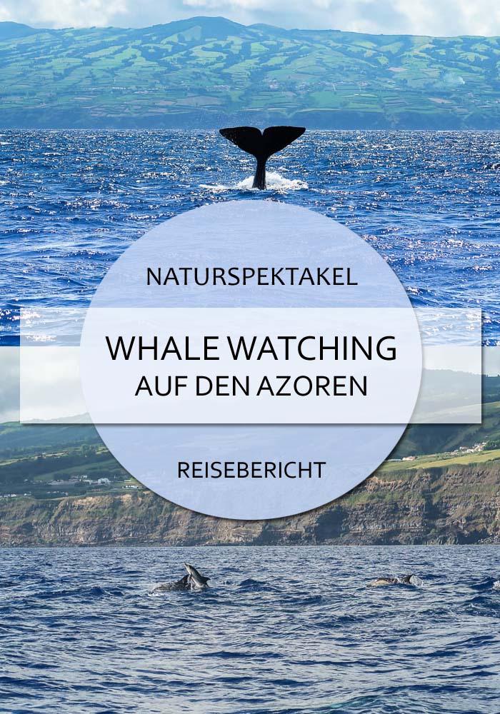 Whale Watching auf den Azoren Reisebericht Pin