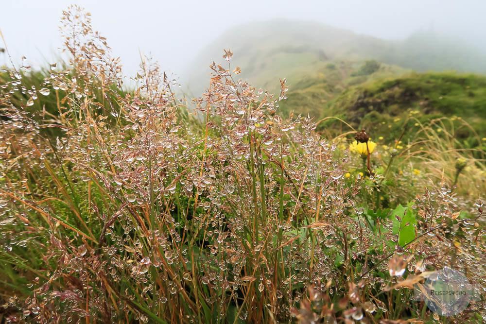 Regentropfen auf Gras
