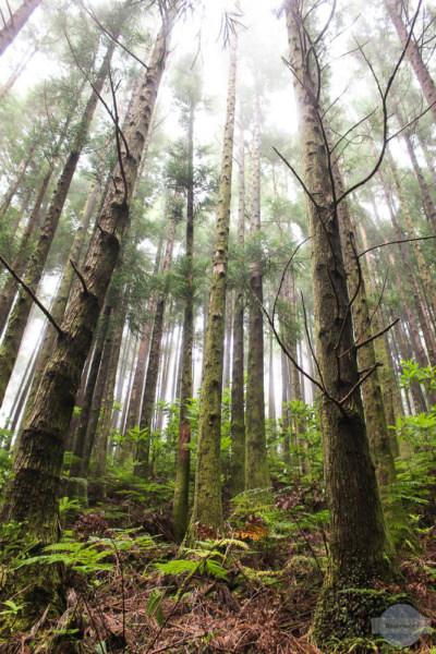 Regen Wald Foto