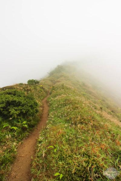 Ein Weg, der sich im Nebel verliert