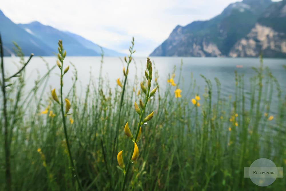 Regentropfen auf gelber Blume