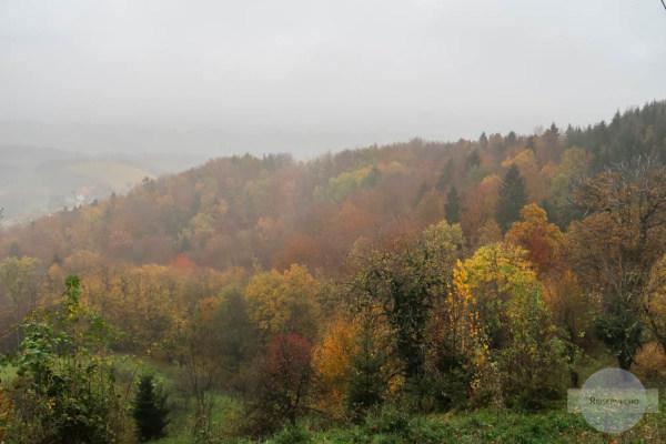 Herbstwald im Regen