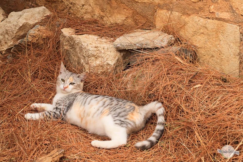 Hübsche Katze chillt in der Sonne
