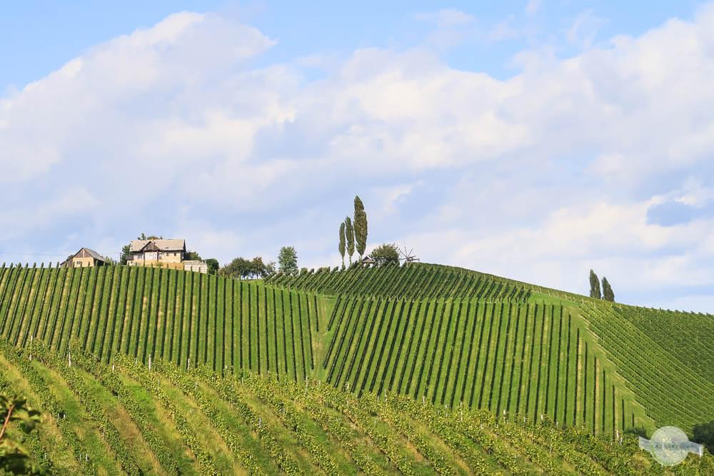Glanz an der Weinstraße in der Südsteiermark