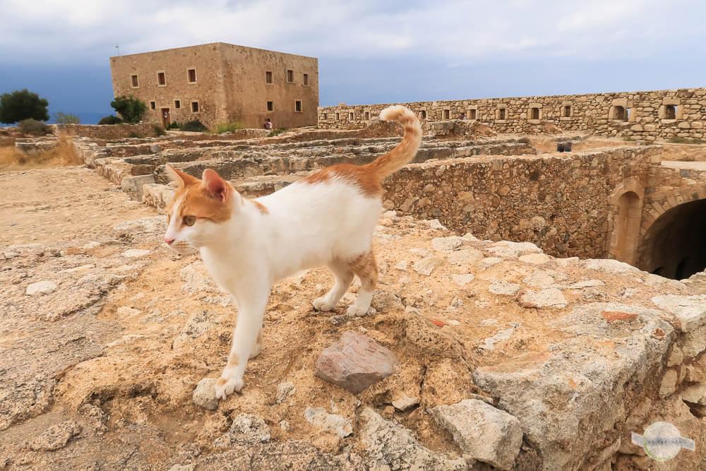 Katzen in der Fortezza von Rethymno Kreta