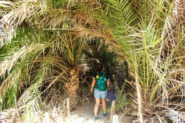 Palmenweg auf Kreta