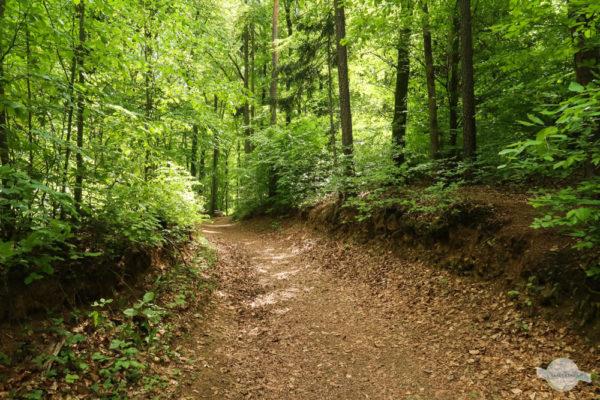 Waldweg mit viel Laub