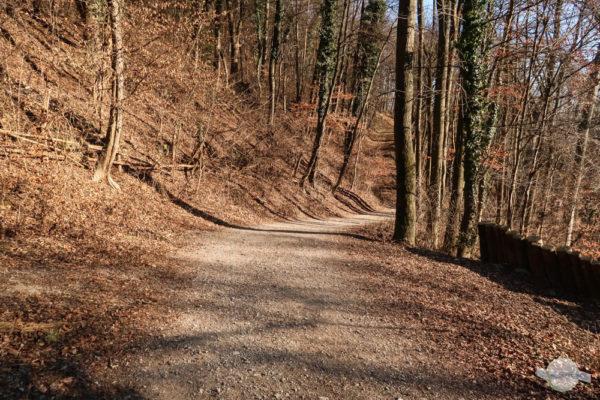 Der Forstweg zur Burgruine Gösting