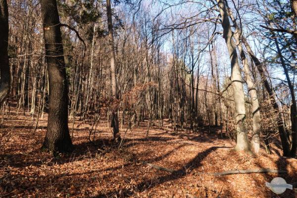 Über den Karolinenweg durch den Wald auf den Plabutsch wandern