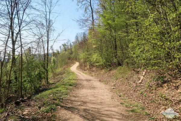 Geschlungener Waldweg