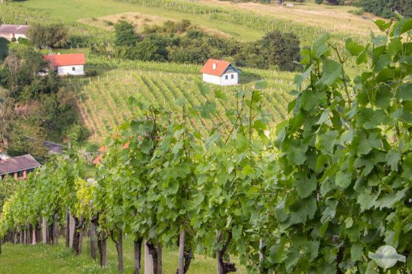Kleine Häuser und Weingärten