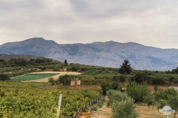 Blick von Osten über die Weingegend auf den Psiloritis